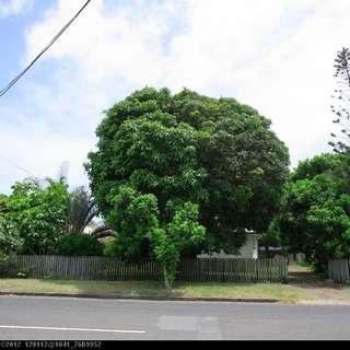 Thumbnail of 178 Cypress Street, URANGAN, QLD 4655