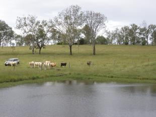 160 Acres, Only 50 mins to Brisbane - Priced to Sell Now! - Mount Forbes