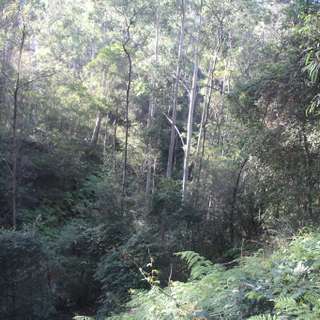 Thumbnail of Lot 54 Putty Road, Garland Valley, NSW 2330