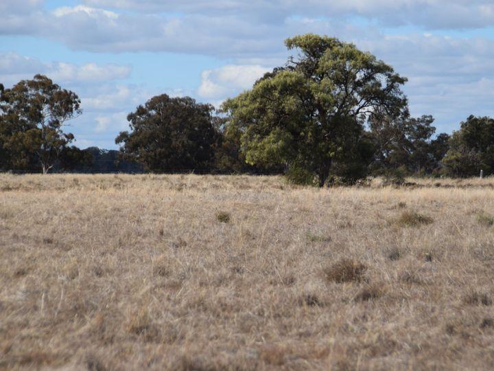 'Lexden', 66 Riverview Road, Gilgandra, NSW