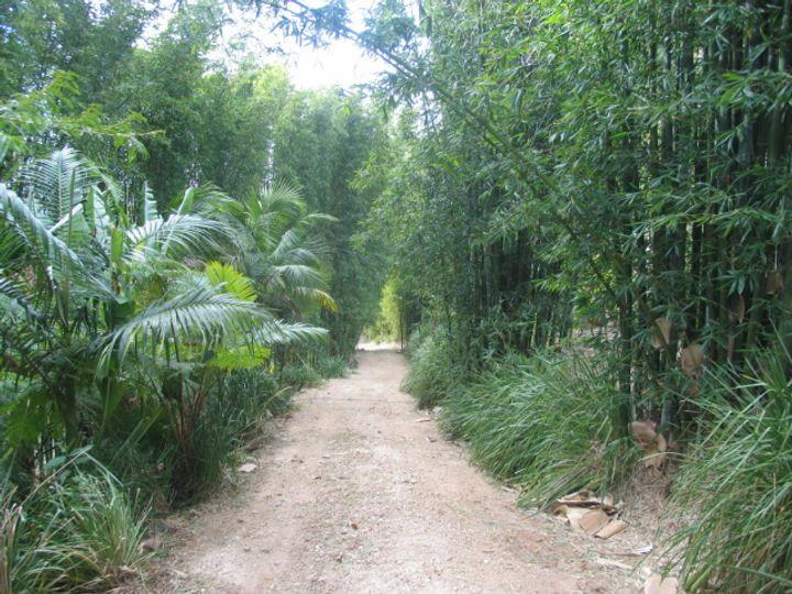3537 Nerang Murwillumbah Road, Natural Bridge, QLD