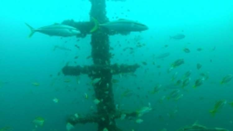 New Shoalhaven Offshore Reef - News - Ray White Nowra NSW