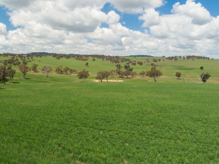 127 Surveyors Creek Road, Woolbrook, NSW