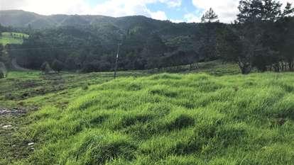 Okaihau