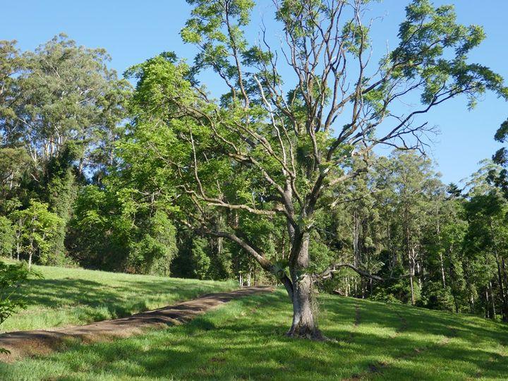 1213 Horseshoe Creek Road, Kyogle, NSW
