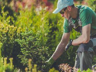Garden Makeover, Landscaping & Maintenance Business - Balmain