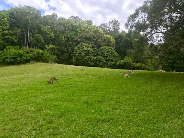 7 Mango Lane, Currumbin Valley, QLD